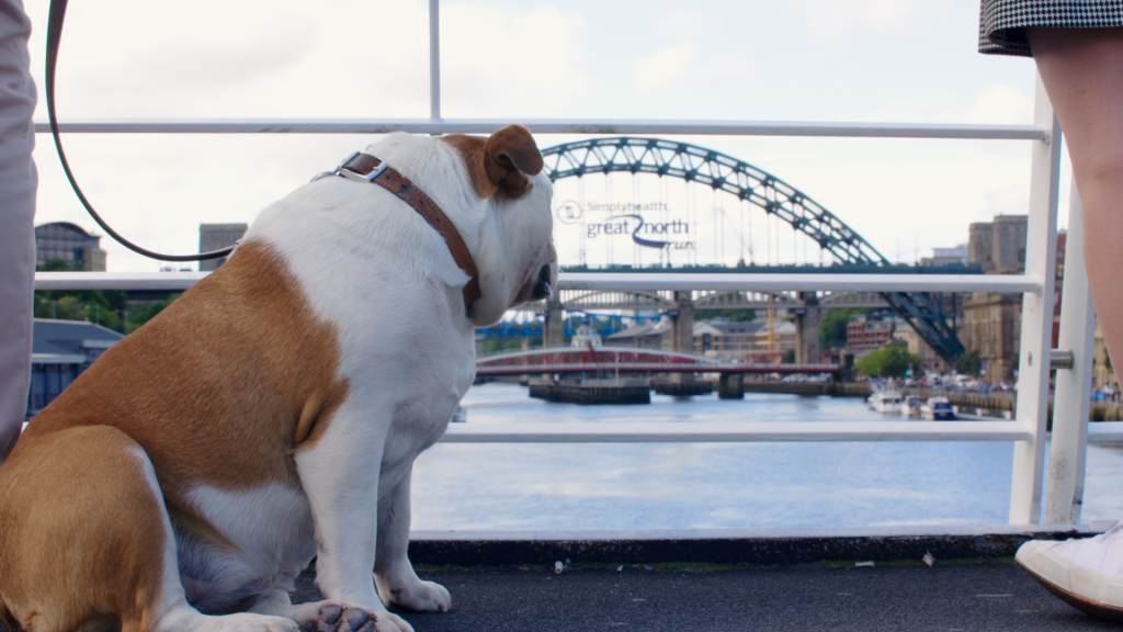 NewcastleGateshead is a brilliant, dog-friendly place for a citybreak.